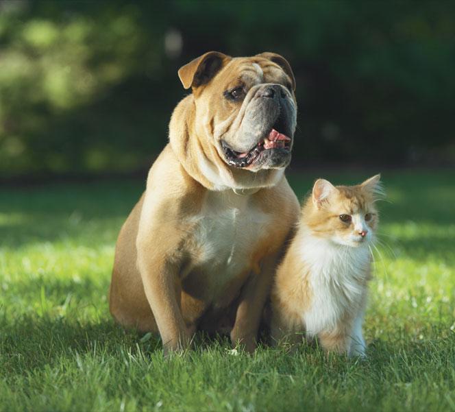 Friendly Pet Boundaries image 0