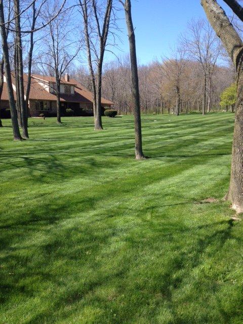 A-Plus Landscaping Service LLC image 0