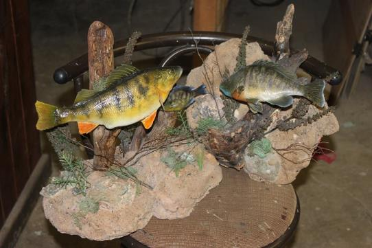 Dave's School Of Taxidermy image 2