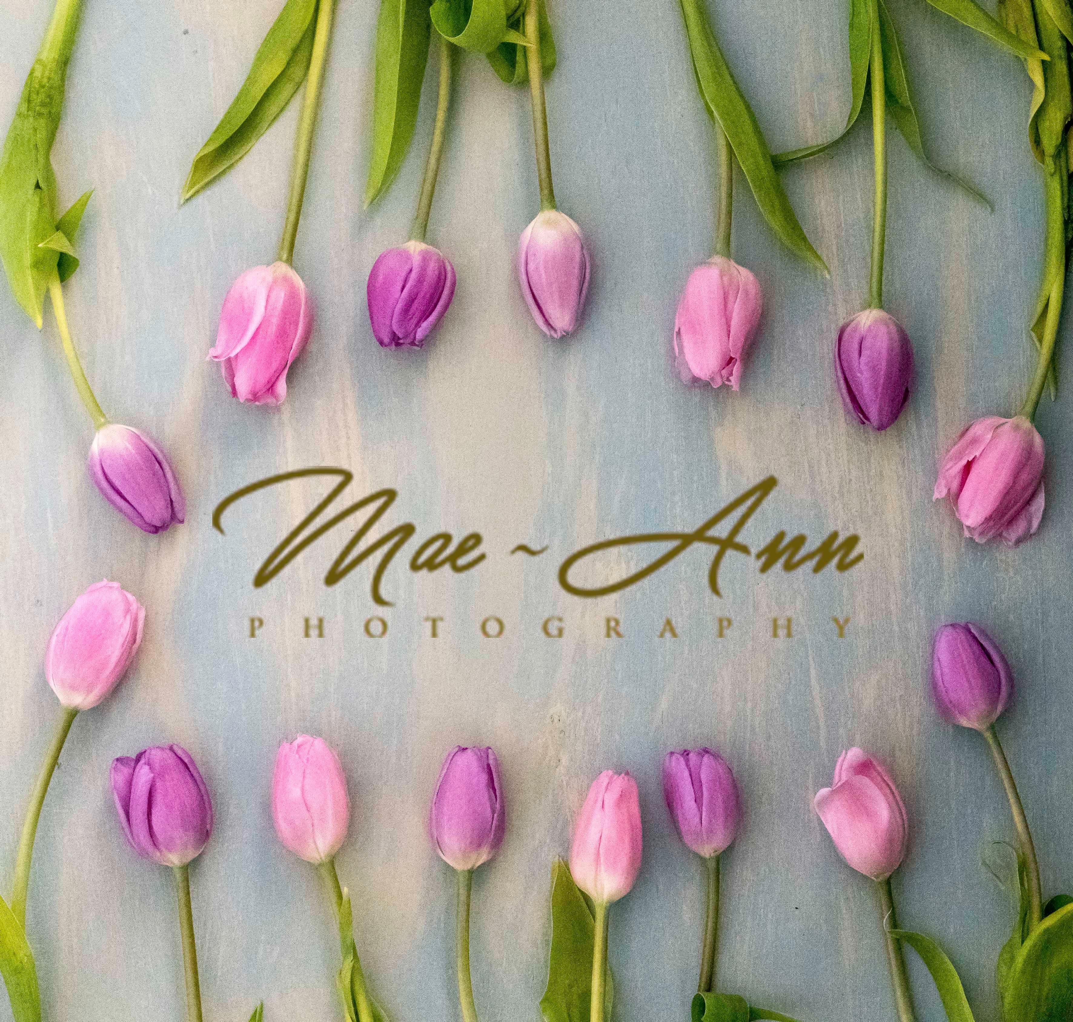MaeAnn Photography LLC image 0