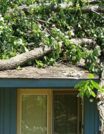 Jeff's Tree Service image 7