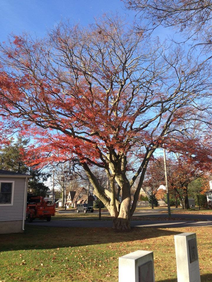 Toms River Tree Service image 2