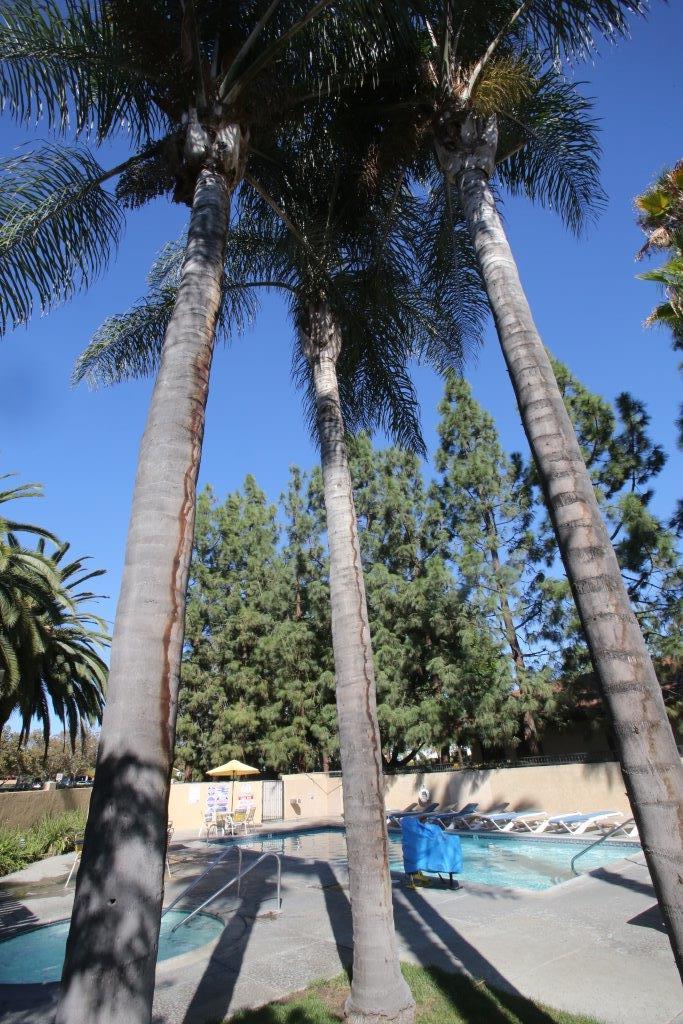 Los Angeles / Pomona / Fairplex KOA image 5