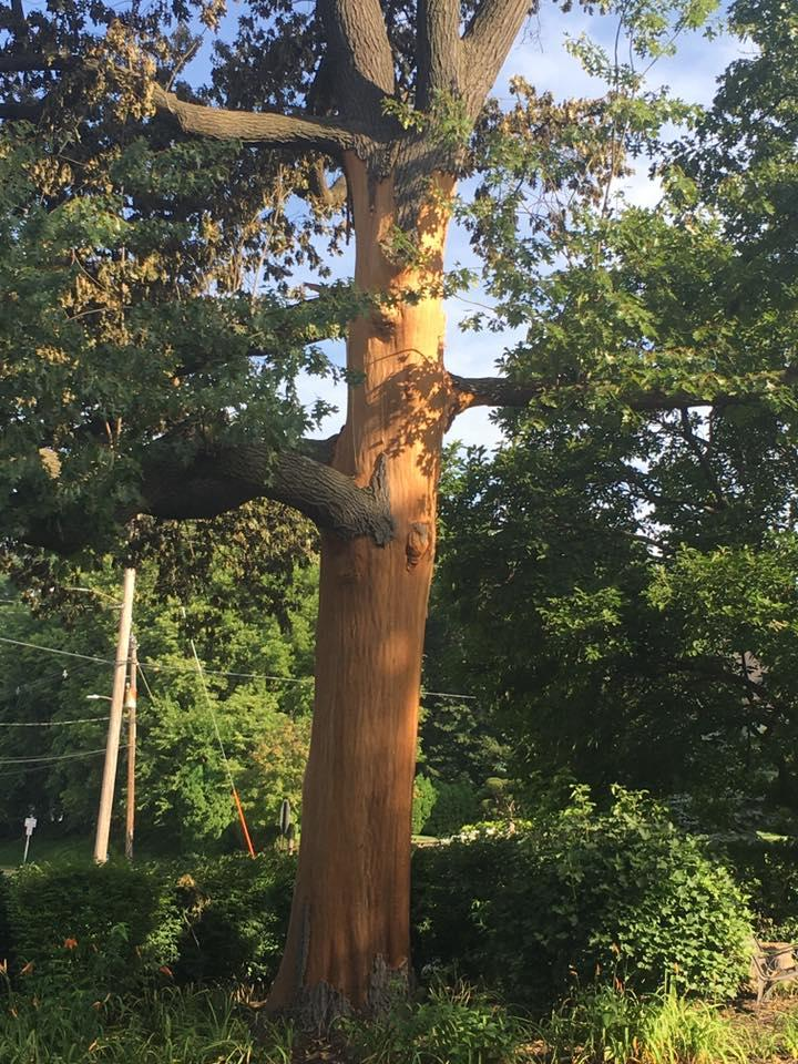 Freers & Sons Tree Service image 7