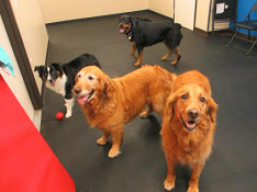 Animal Care Center of Castle Pines image 3