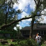 Russ's Tree Service image 8