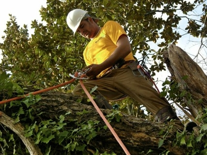 Houston Tree Service image 4