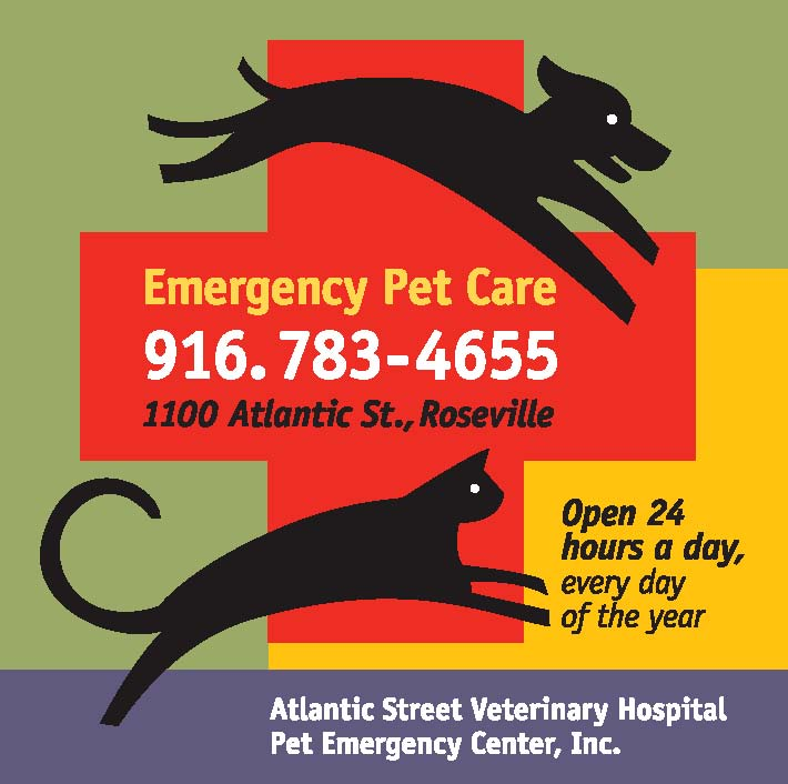 atlantic street veterinary hospital pet emergency center