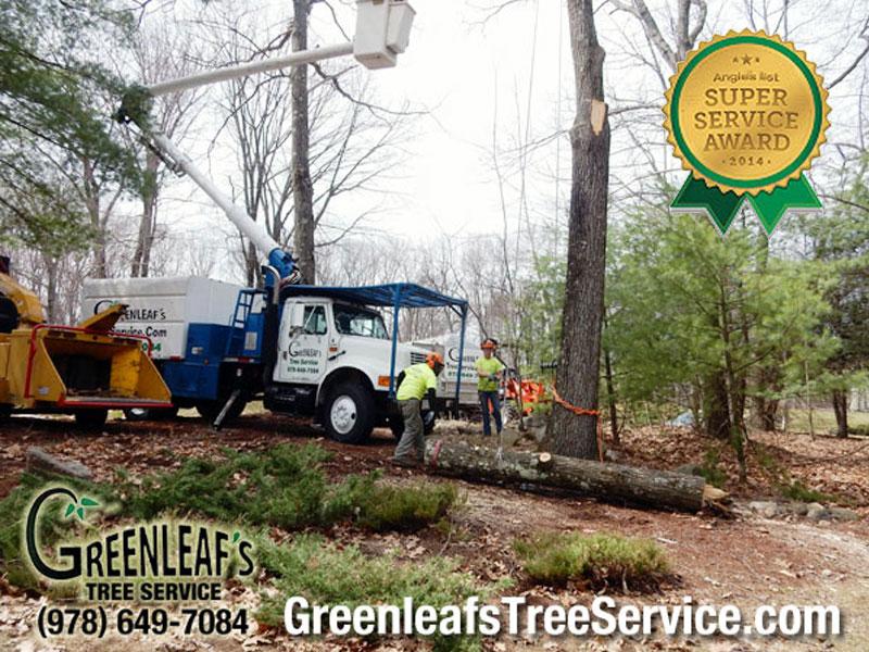 Greenleaf's Tree Service image 4