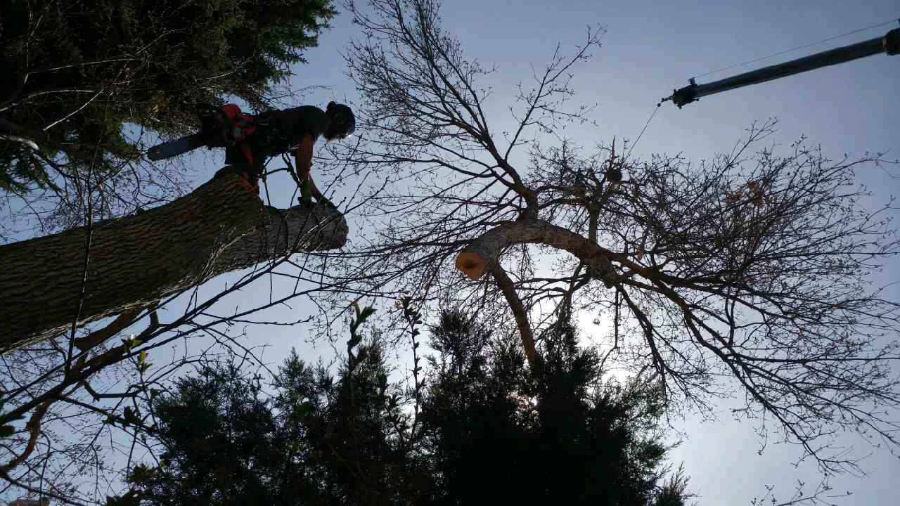 Mortensen Tree Service, Inc.