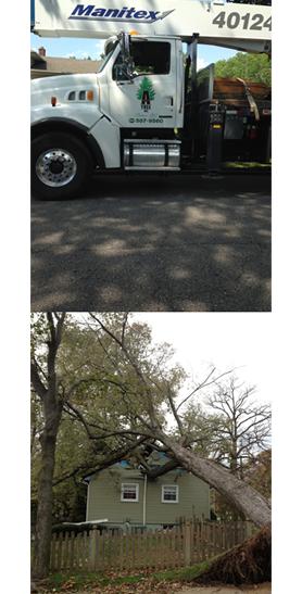 Amoroso Tree Service Inc image 3