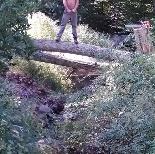 Dunn's Tree Service image 4