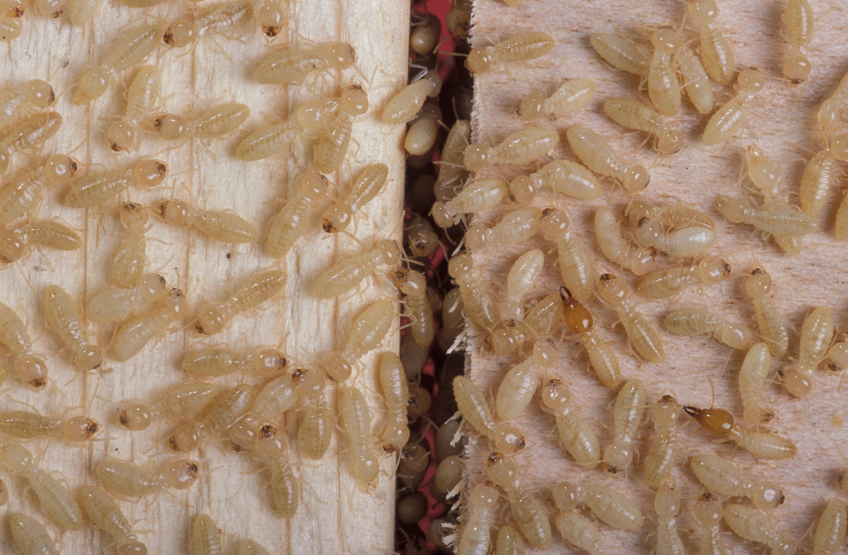 Above All Termite & Pest Control image 3