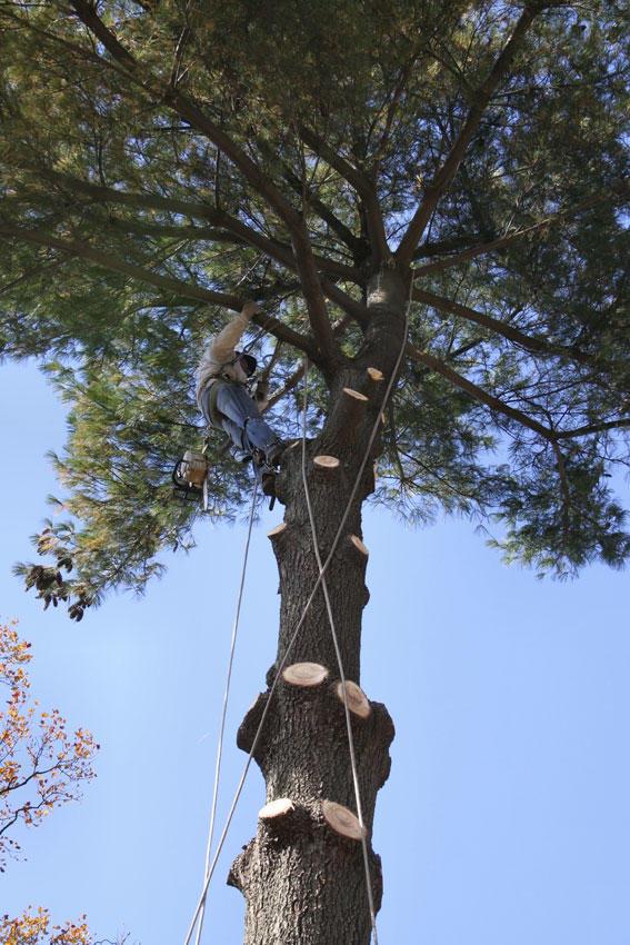 Gregerson Tree Service LLC image 0