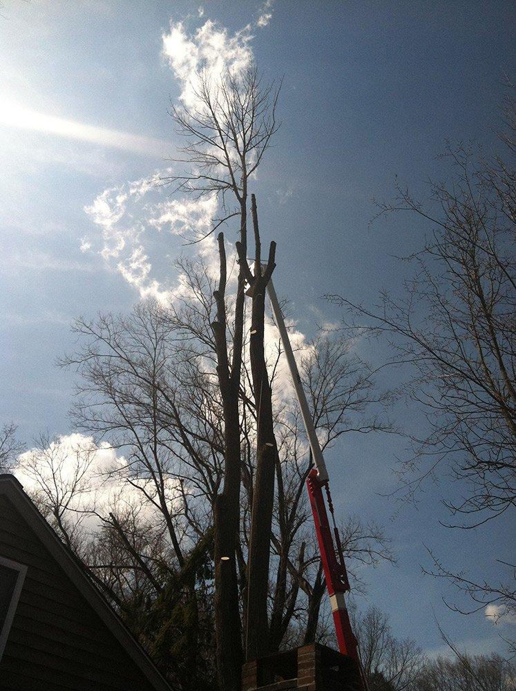 White Hills Tree Removal LLC image 3