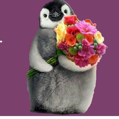 Penguin Flowers and Gifts image 0