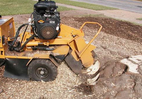 A-1 Stump Grinding image 3