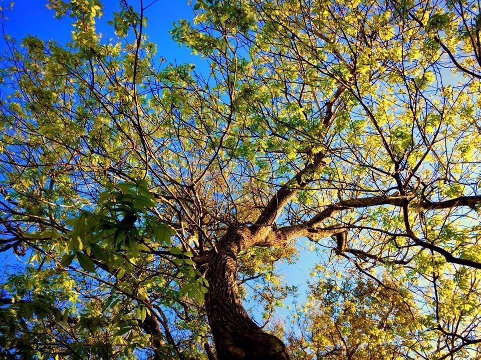 ABC Tree Service image 1
