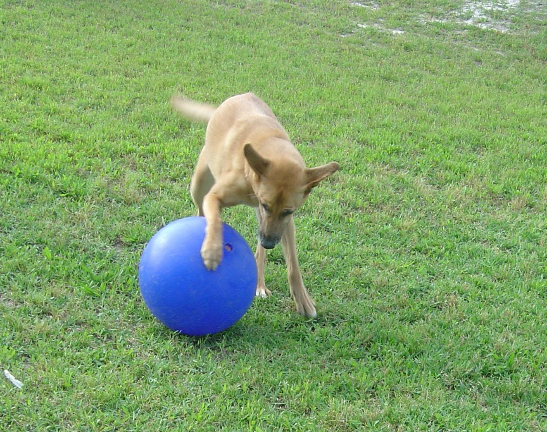 Fondren 5 star pet resort in missouri city tx 281 835 for Five star dog resort