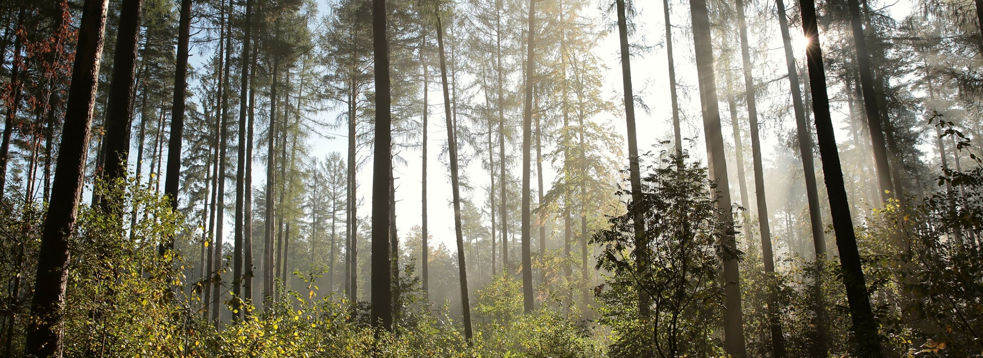 Alpine Tree Service image 9