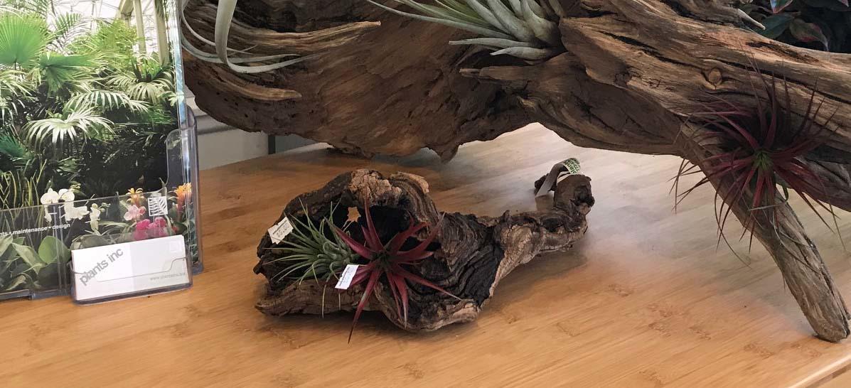 plants inc image 9