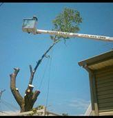 spears tree service image 5