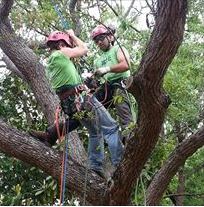 Backridge Tree Service image 2