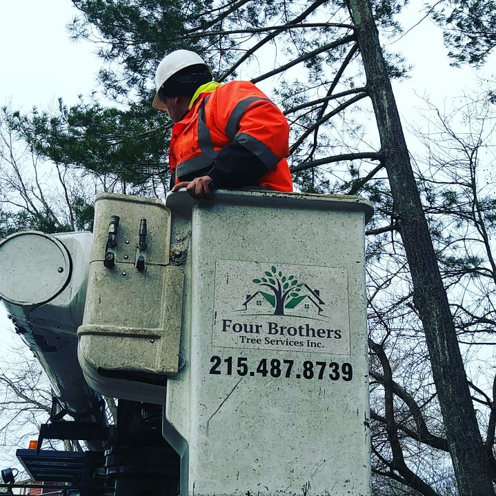 Four Brothers Tree Service Inc. image 6