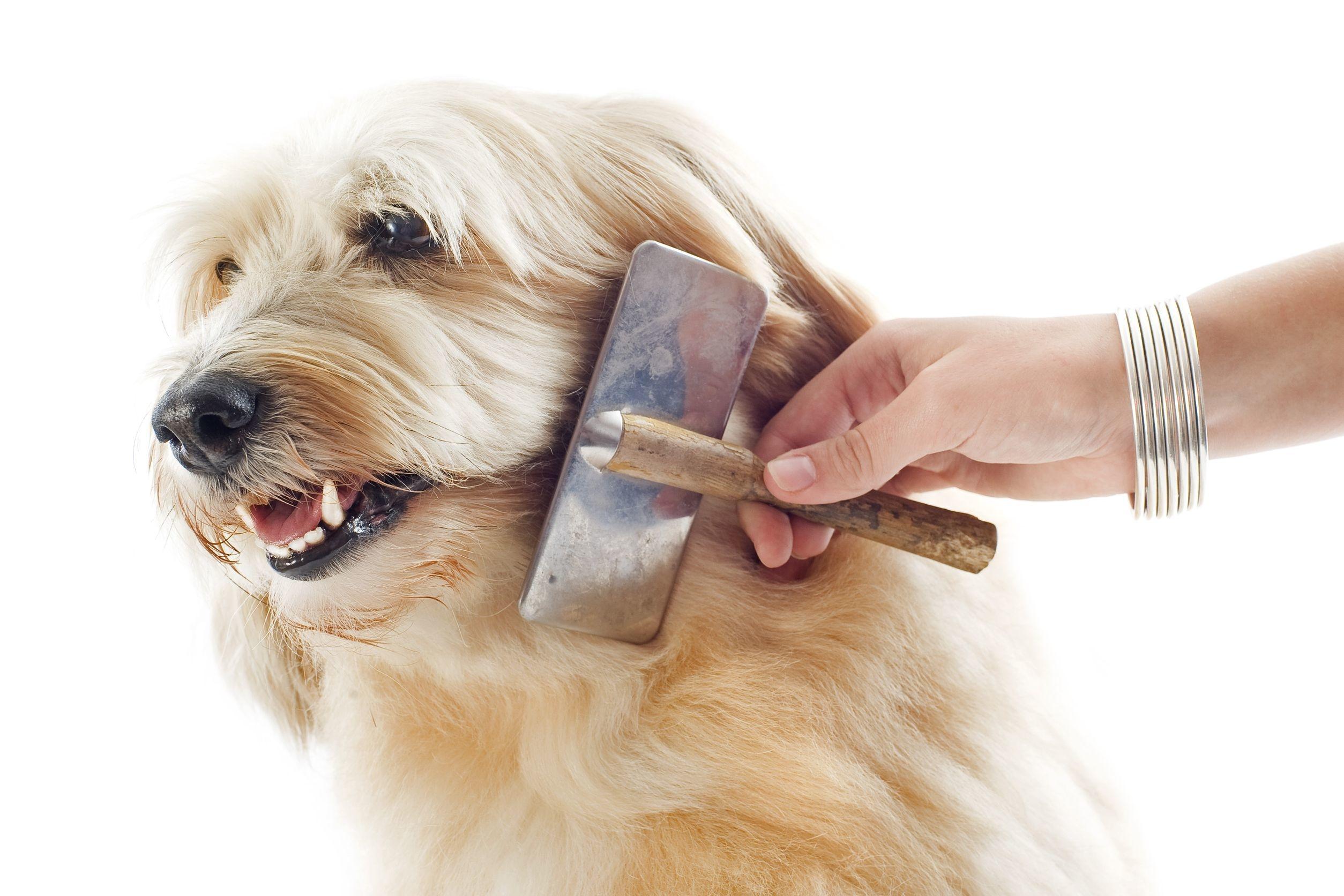 Pup Culture image 1