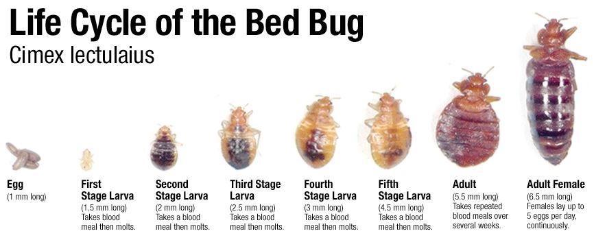 Bye Bye Bugs image 1