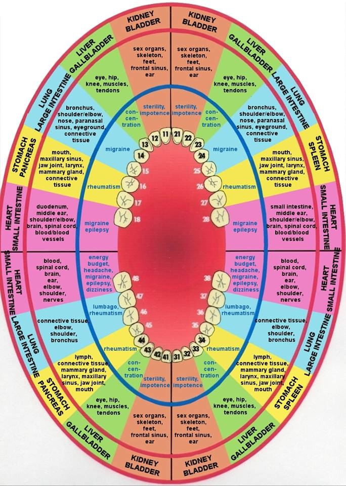 Holistic Dental Arts image 8