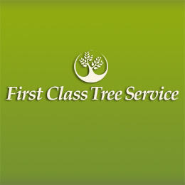 First Class Tree Service image 0
