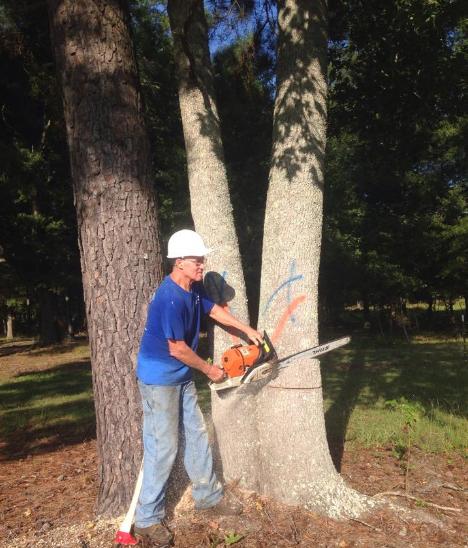 Allen's Tree Service image 5