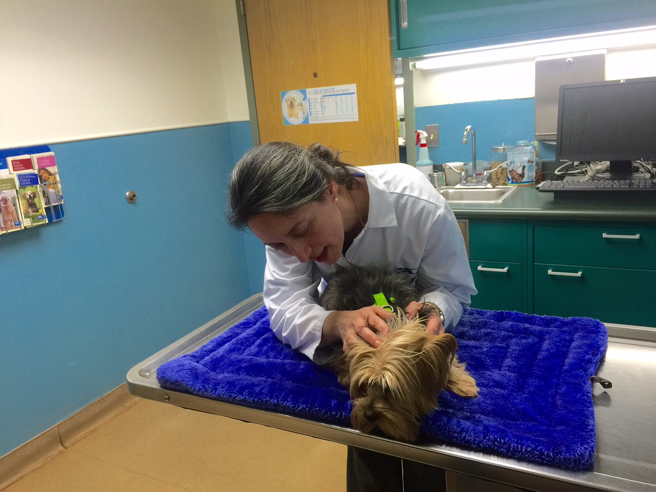 VCA Brown Animal Hospital image 10