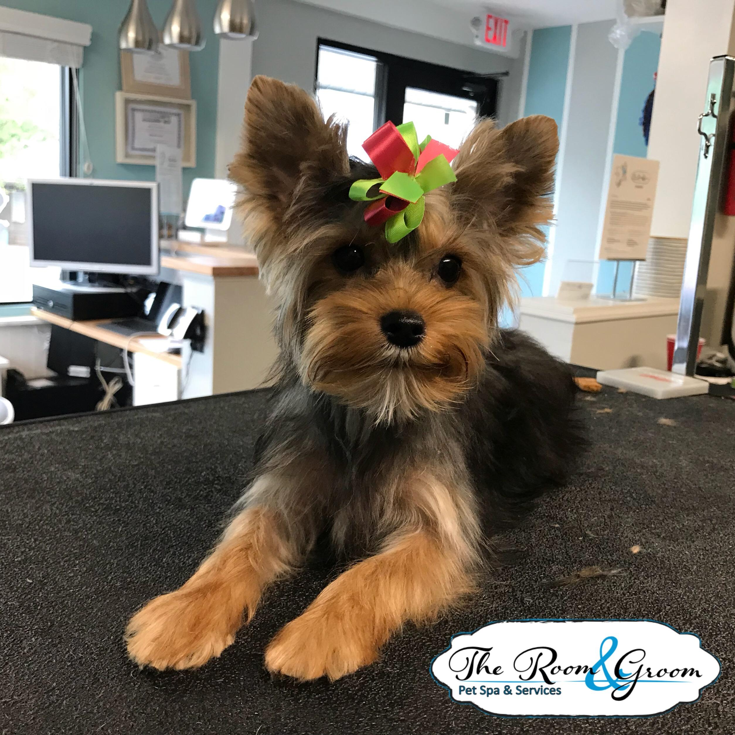 The Room & Groom, Pet Spa & Services image 70