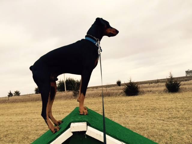 Ledges Farm Dog Camp image 3
