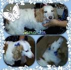 Clip N' Dip Pet Grooming image 8