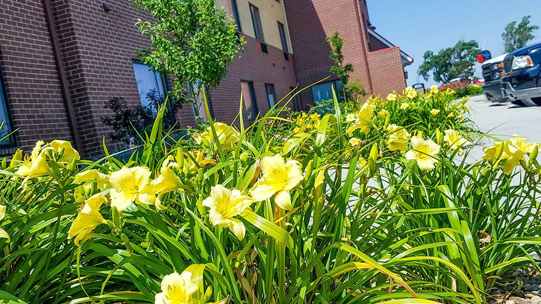 GAS Lawn Pros LLC image 0