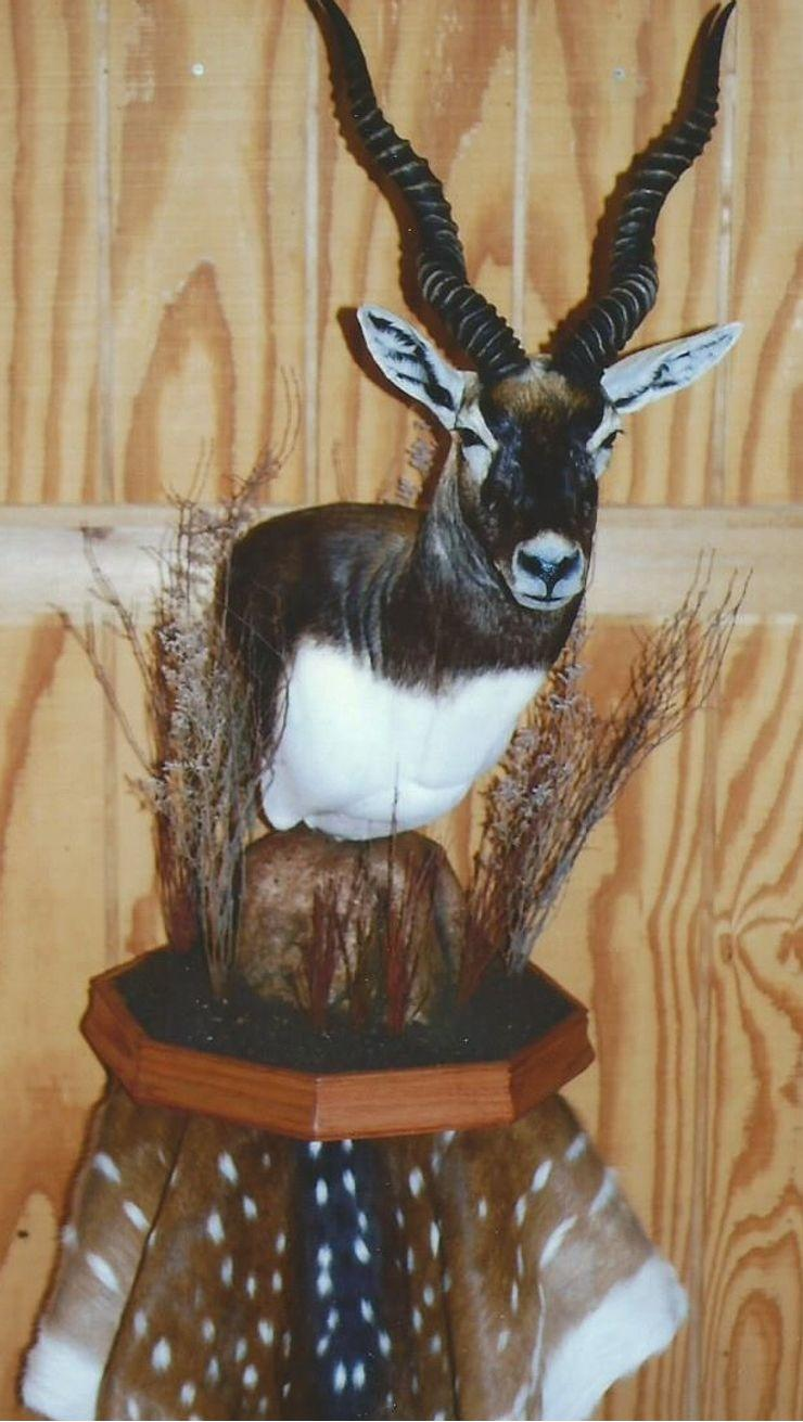 Buck's Taxidermy image 2