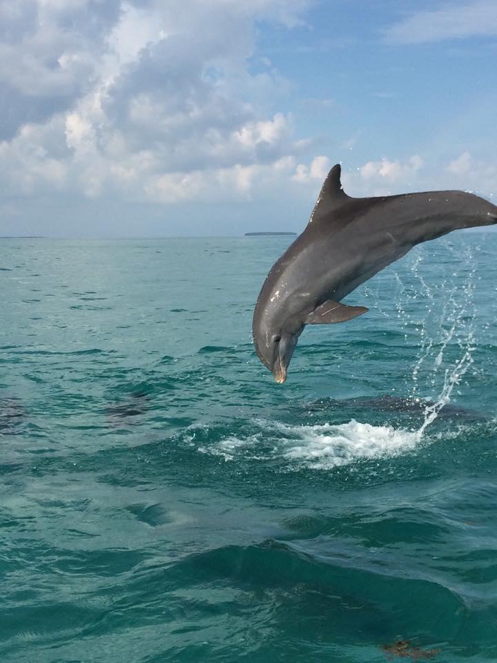 Dolphin Safari Charters Inc image 11