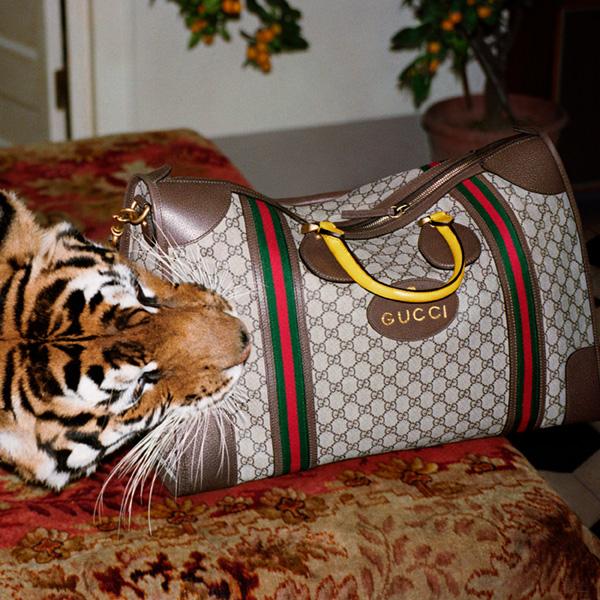 Gucci image 5