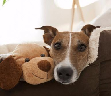 Animal Care Clinic Inc image 2
