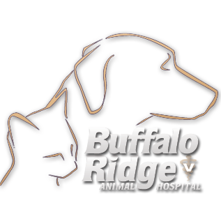 Buffalo Ridge Animal Hospital image 1