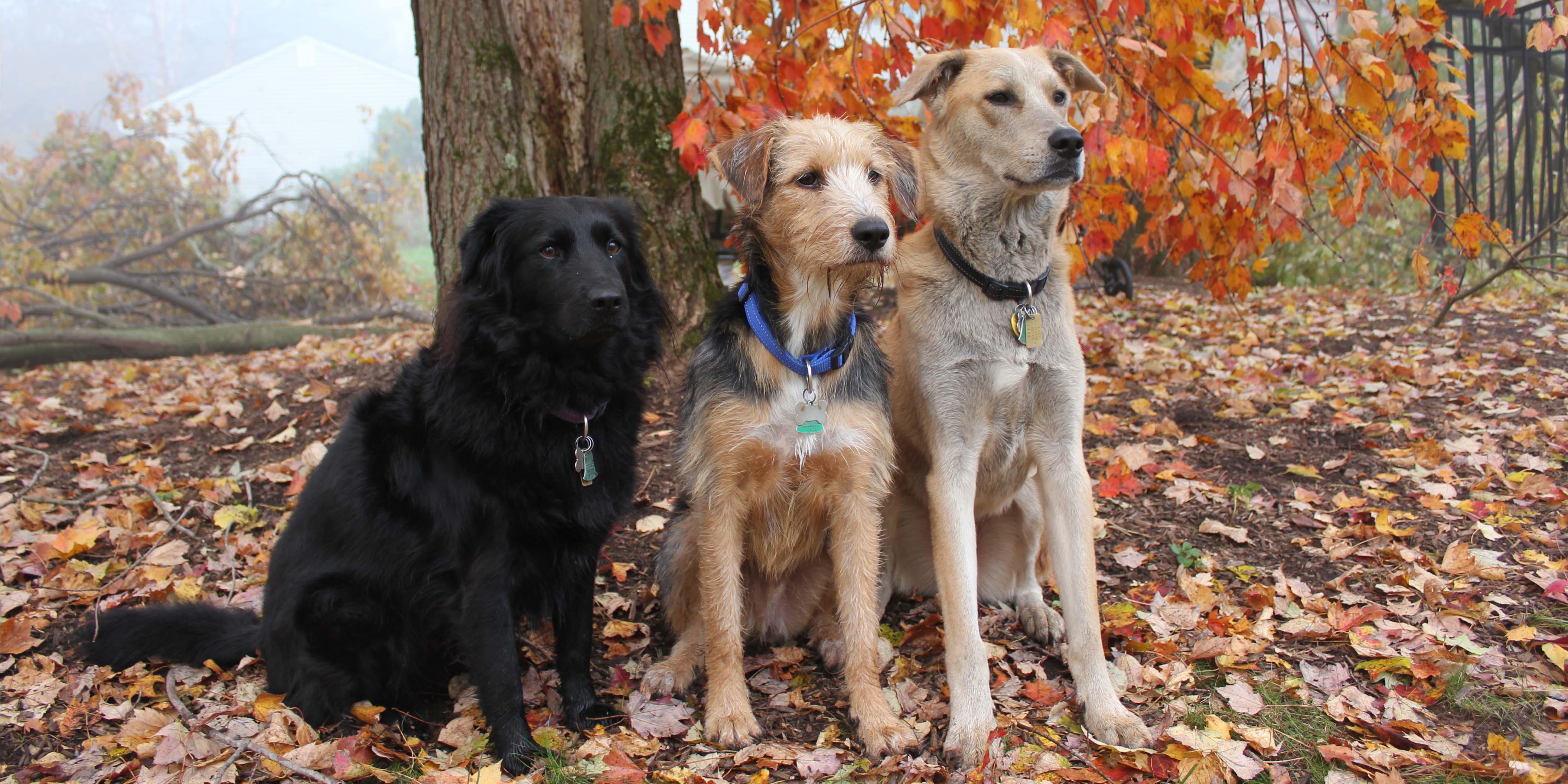 Pet Care Kennels image 2