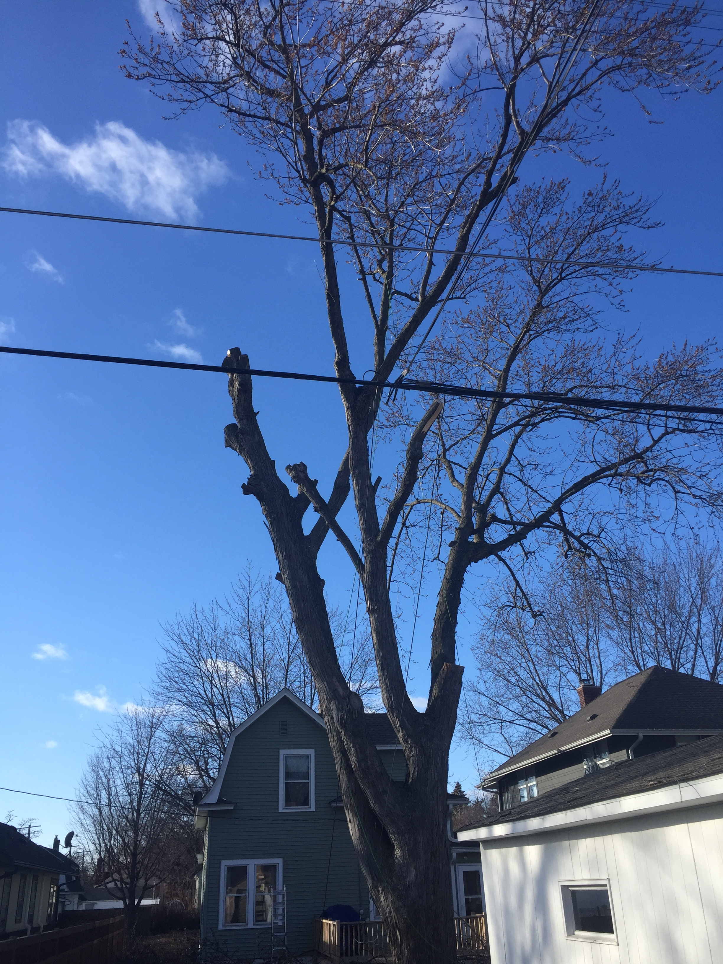 Total Tree Care image 0