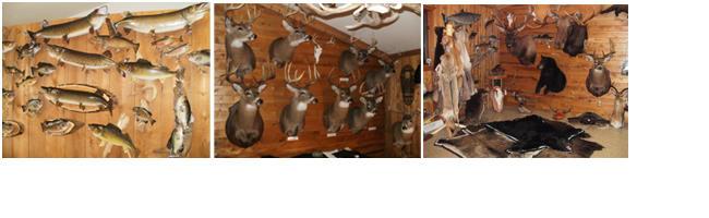 Dave's Wildlife Ltd. Taxidermy image 0