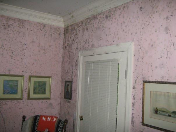 Severe mold growth in a local home! #SERVPRO