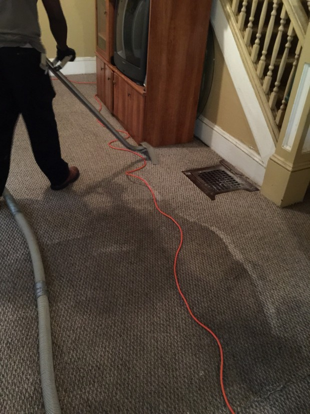 A1 Carpet Cleaners Akron Carpet Vidalondon