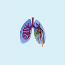 Logo von Lungenfachärztliche Allergologische Gemeinschaftspraxis