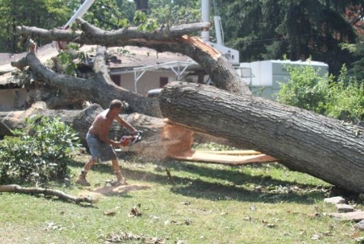 Sprouse's Tree Service LLC image 7